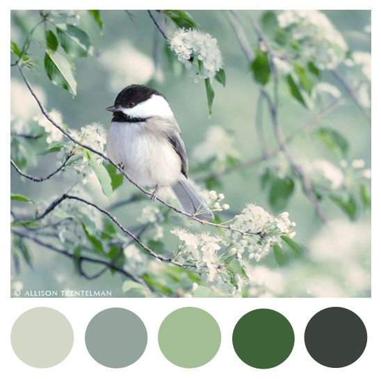 Chickadee in Spring  by Sweet Little Thrills:
