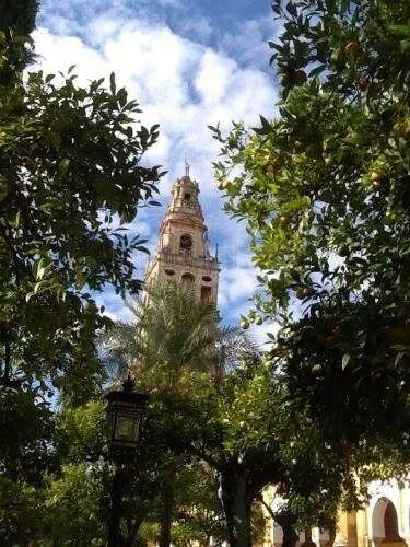 Córdoba༺♥༻patios de los naranjosde la  - Mezquita-Catedral de Córdoba