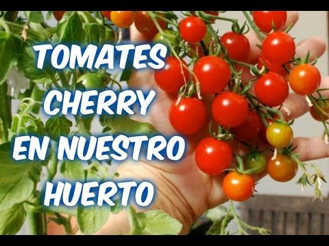 Pin En Aprendiz De Tomates