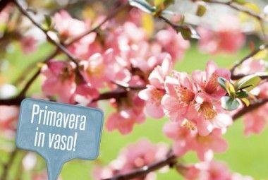 Fiori primaverili da vaso: 10 fiori per portare la primavera in casa!   Giardinieri in affitto