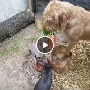 Cachorro preocupado em alimentar seus amigos