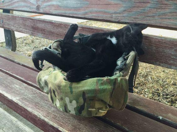 A stray kitten fell asleep in my combat helmet