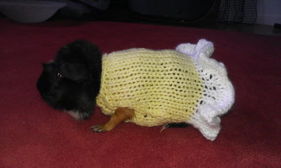 Hand Knit Guinea Pig Sweater in The Princess design