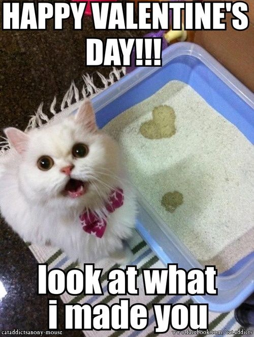 Searching For Valentines Day Memes Choose From Our Collection Of Cute And Funny Valentines Day Mem Cat Birthday Memes Funny Valentine Memes Happy Birthday Cat