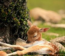 animal, baby, bambi, cute, deer, djur - inspiring picture on Favim.com
