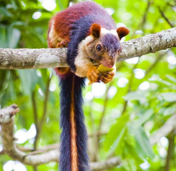 20 απίστευτα ζώα που θα ξαναδείς και δεύτερη φορά