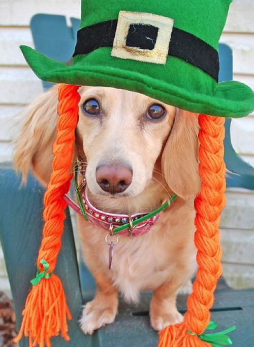 20 Dogs & Cats Who Are Ready For St. Patrick's Day   Her Campus