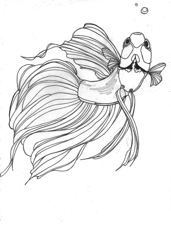Betta drawing would make a great tattoo betta fish for Betta fish coloring pages