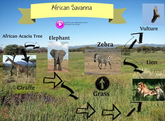 the science of tropical savannas essay Climate change and the tropical savannas climate change - an australian guide to the science and potential impacts, australian greenhouse office.