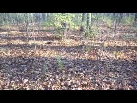 deer hunting videos Scouting deer because I have a bad case of buck fever part I - http://best-videos.in/2012/11/10/deer-hunting-videos-scouting-deer-because-i-have-a-bad-case-of-buck-fever-part-i/