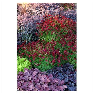Coreopsis verticillata 'Limerock Ruby', Sedum 'Jose Aubergine', Heuchera 'Obsidian', Heuchera 'Berry Smoothie' and Tanacetum vulgare 'Golden Fleece' - Bastin Nursery
