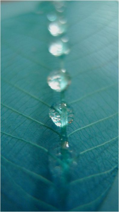 Turquoise, Teal Dew Drop Line ~