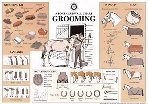 picture relating to Grooming Tools for Horses Printable Worksheet called Horse Brushes Diagram Wiring Diagram