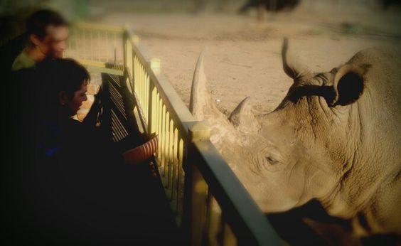 Rhino petting