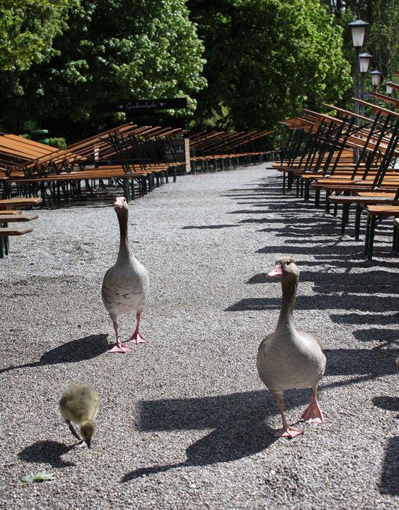 No guests at #Seehaus #Biergarten?