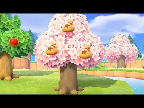 How To Get A Money Tree In Animal Crossing New Horizons Youtube