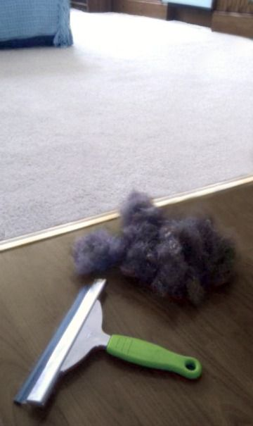 We have hard wood with a few rugs and this tip works wonders! Who knew? Window Squegee to Remove Pet Hair From Carpet (: