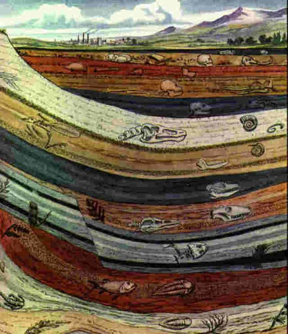 What all can we incorporate in a project on sedimentary geology?