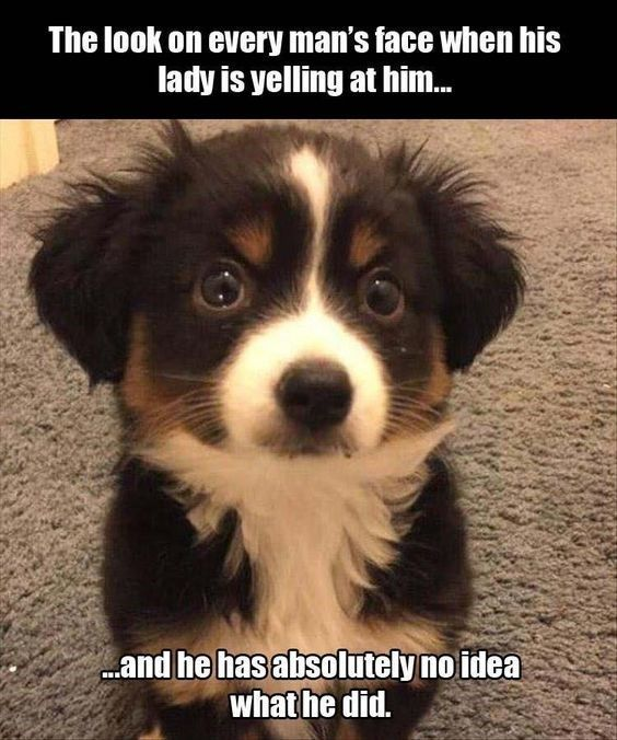 13 Confused Dog Photos And Memes That Will Leave You Laughing