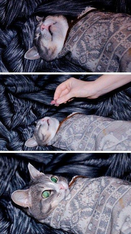 Gato despiertaa