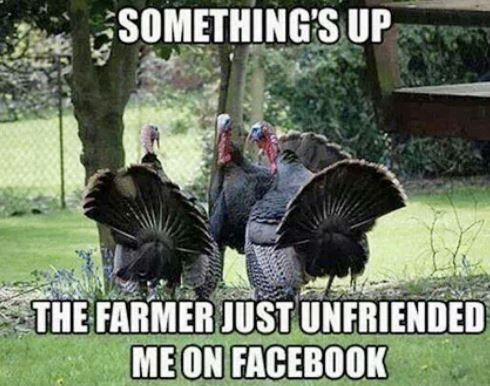 Happy Thanksgiving Memes 2020 Funny Turkey Pictures Funny Thanksgiving Memes Happy Thanksgiving Memes