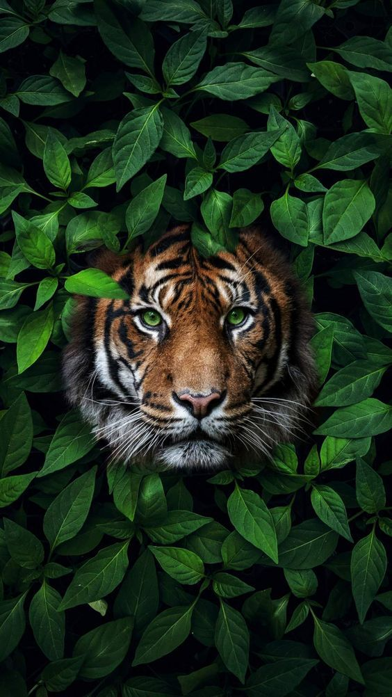 Cool Iphone 11 Pro Max Backgrounds Wild Animal Wallpaper Animal Wallpaper Majestic Animals Beautiful best wallpaper for iphone pro