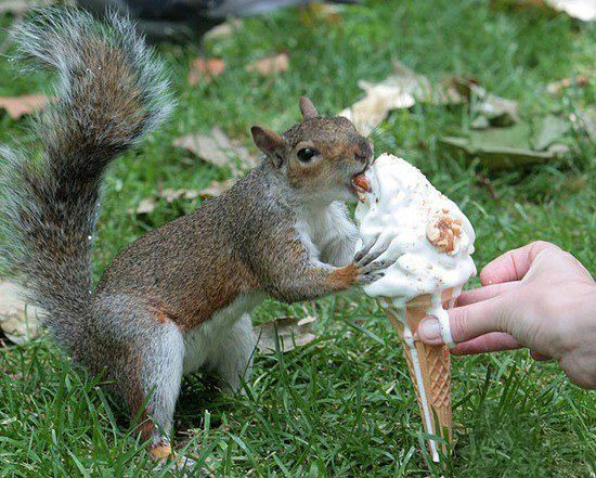 Squirrel having ice cream,yum,yum >>>ew