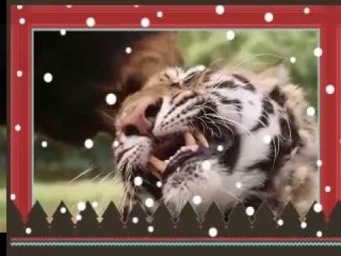 عجائب صداقة بين الحيوانات المفترسة والحيوانات اكلة الاعشاب والحيوانات ا Animals Youtube Lion