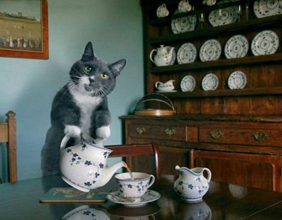 A cup of tea from a cat makes us smile