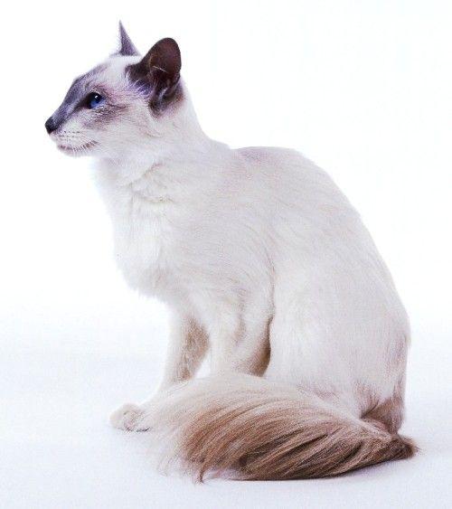 6 Allergiker Katzen Fur Uberempfindliche Samtpfotenfreunde Wohnideen Und Dekoration Susseste Haustiere Niedliche Tierbilder Katzen