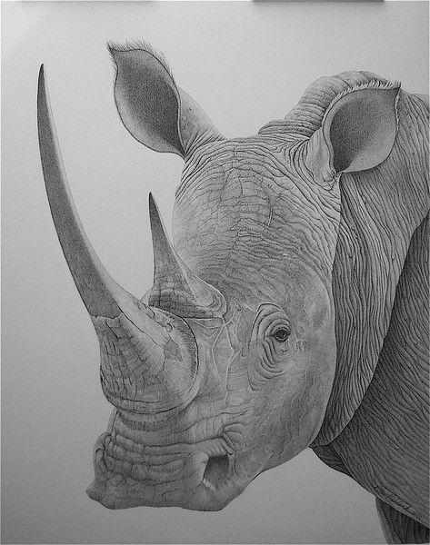 Rhino by Rita Niblock on ARTwanted