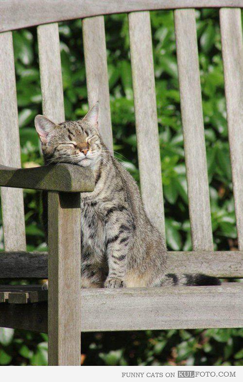 Sun Cat: