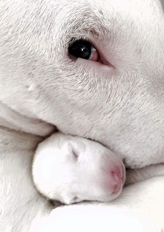 Too precious . . . . . I WANT IT!!!