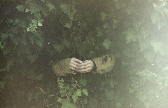 hands in ivy photograph