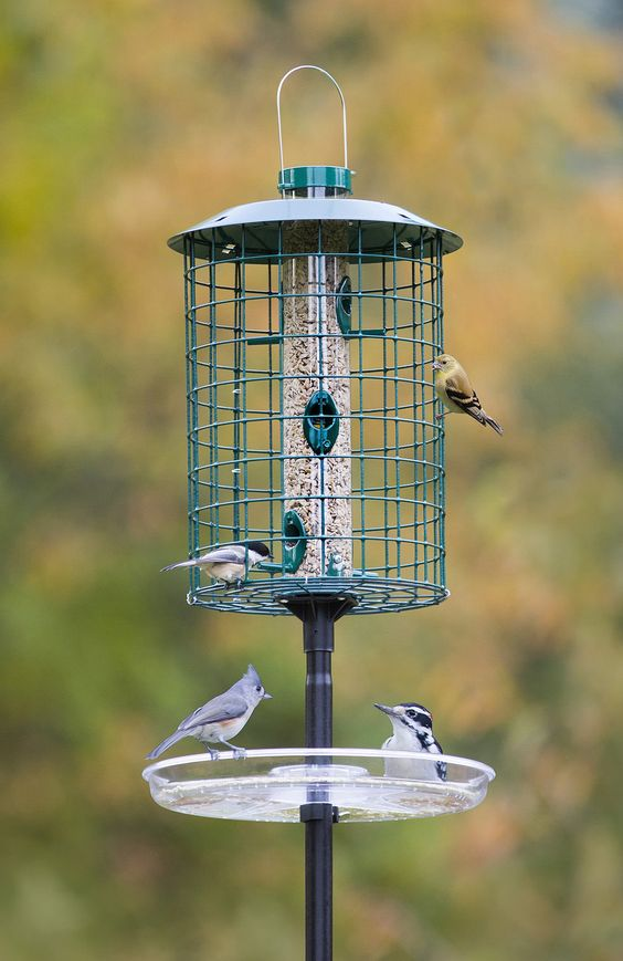 Small Birds Trays And Seeds On Pinterest