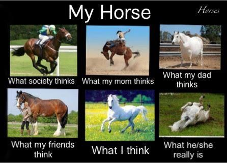 So true haha ~Courtesy of: Equestrian Lifestyle Magazine's Facebook page
