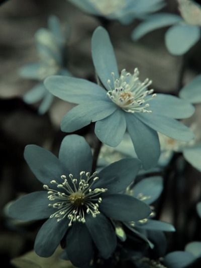 Teal flowers.