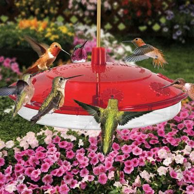 8 Port Hummingbird Feeder - Droll Yankees - H8-2