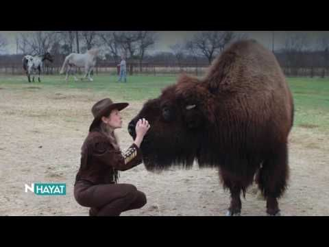 N Hayat Evcil Hayvanda Yeni Boyut Bizon Animals Friends Unusual Animals Animals