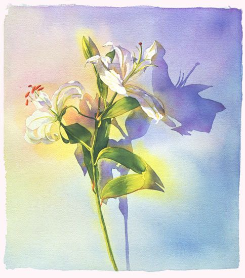 Lily By Marlies Merk Najaka Giclee Print Watercolor Paintings