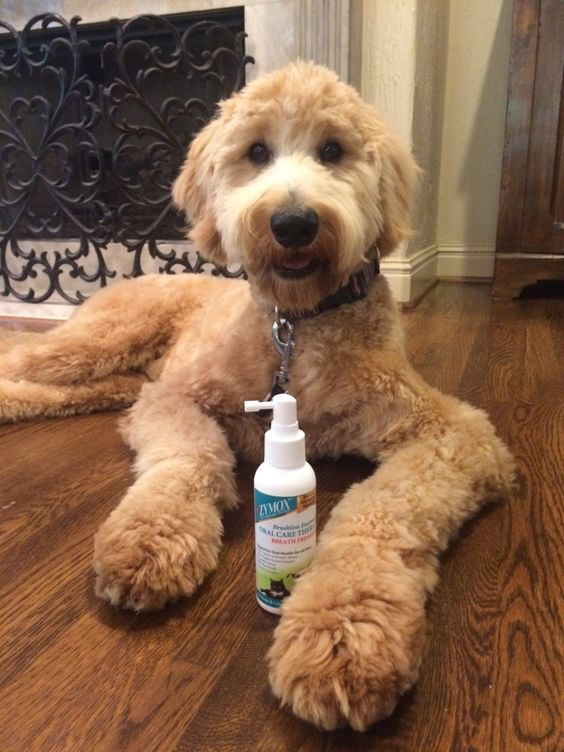 Have bad breath yet but here s a remedy for bad breath in dogs