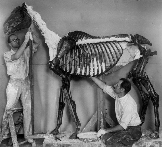 the death of phar lap essay The mystery surrounding the death of phar lap, australia's greatest racehorse,  has deepened with the discovery of an 85-year-old article.