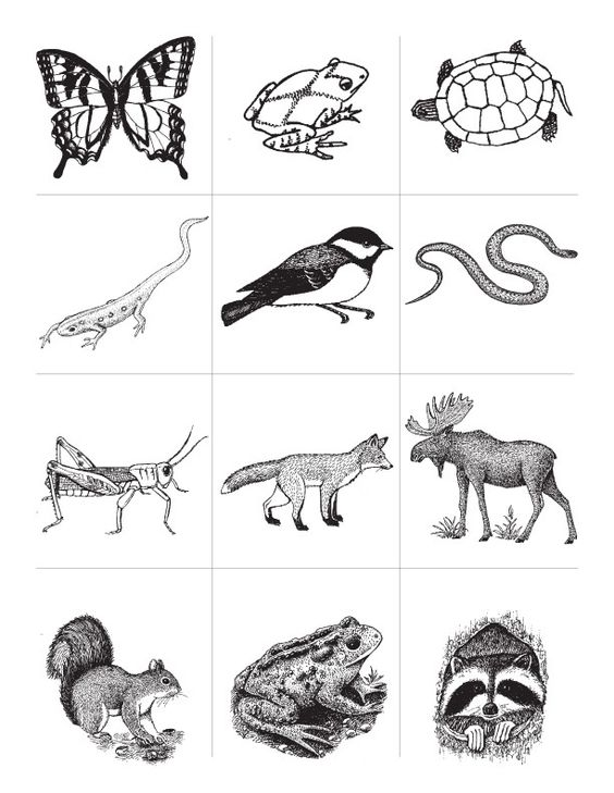 coloring pages animal classification lesson - photo#38