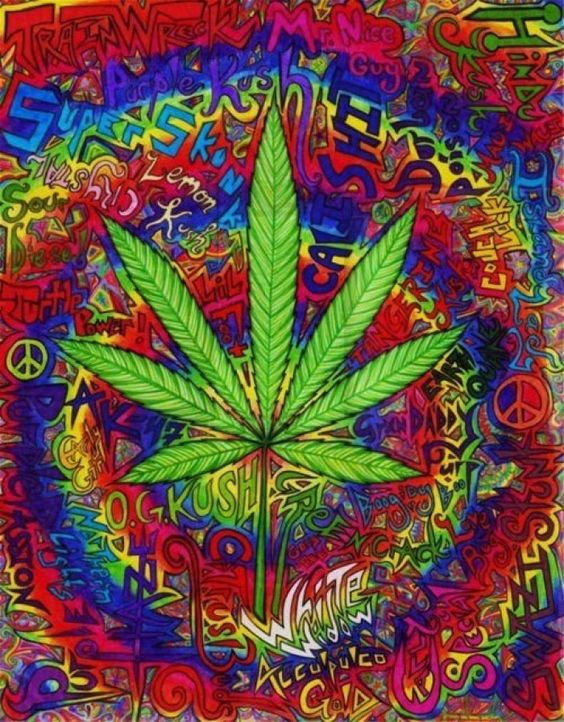 Flopy-Sosa para #GrowLandiaComunidad - http://growlandia.com/highphotos/media/maria-1/