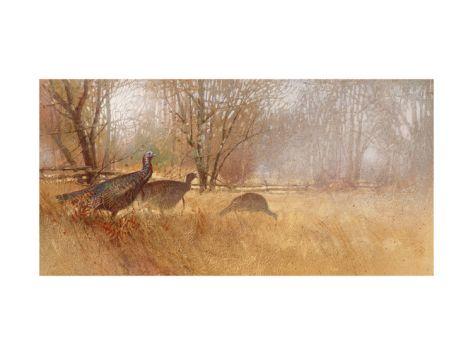 Wild Turkeys Stretched Canvas Print at Art.com