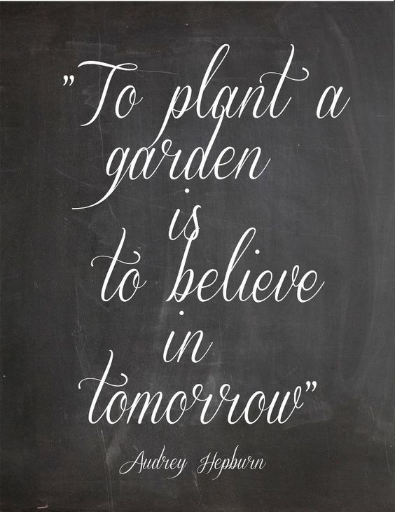 To plant a garden is to believe in tomorrow.  ...I am becoming quickly obsessed with our new gardens. #findyourpassion