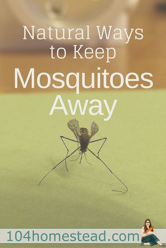 Keep Mosquitoes Away Without Chemicals Natural