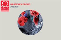 @pascalmeier74 BHF Research Strategy  Our Research Strategy 2015–2020 Over the next five years we hope to fund over half a billion pounds of research to improve the prevention, diagnosis and treatment of all heart and circulatory diseases such as Heart Attack and Stroke Heart Failure Congenital Heart Disease Heart Muscle Diseases Abnormal Heart Rhythms We are committed to supporting research so that no-one dies prematurely from heart and circulatory disease