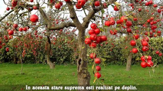 Linistea mintii   http://www.fluxymedia.com/eliana/ http://www.elianacorina.com