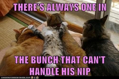 17 Cats That Might Have Had Too Much Catnip Funny Cat Memes Funny Cats Cats